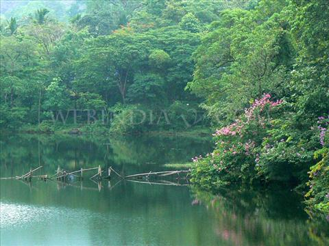 Salim Ali Bird Sanctuary in Goa Salim Ali Bird Sanctuary or