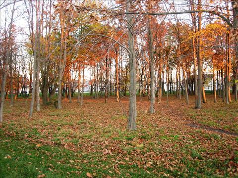 Colourful Fall Season
