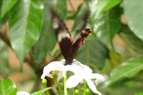 Lapping Nectar