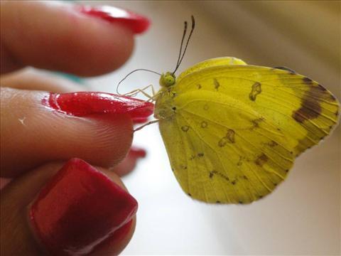 Butterfly in hand