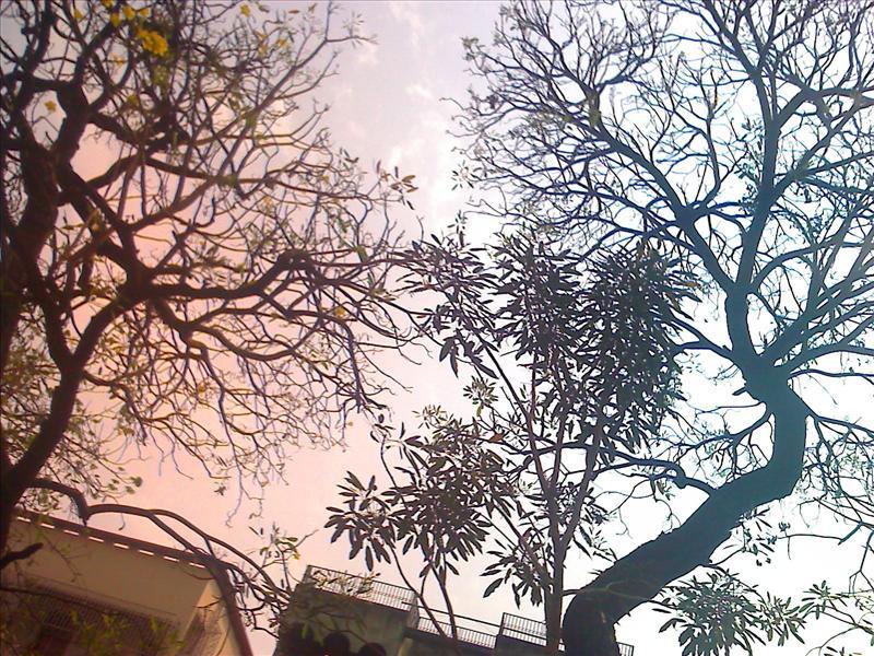 Trees n Nature