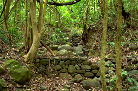 chimmini wildlife sanctuary