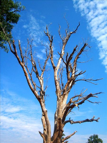 last tree picture