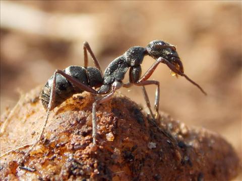 Hey it'z me ant..