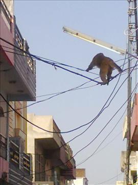 Monkeys's Heights