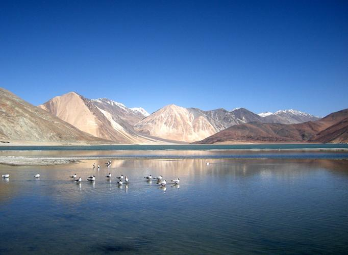 Pangong Lake at Leh with thrush birds