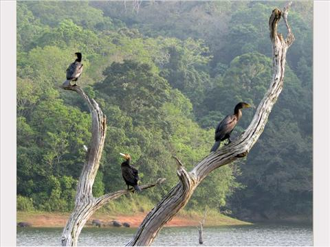 Birds in Thekkady..