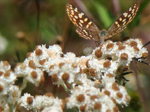 Butterfly displaying Survival of the fittest law in practical