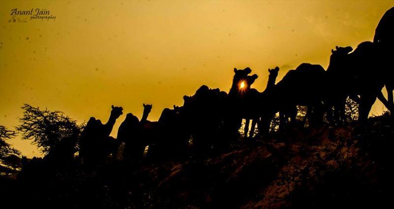 essence of desert..