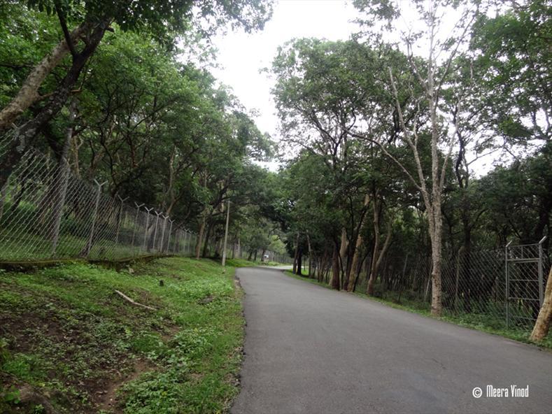 Marayoor Sandal Forest - Munnar Photos