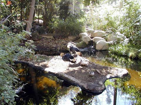 Wild Animal Park, USA