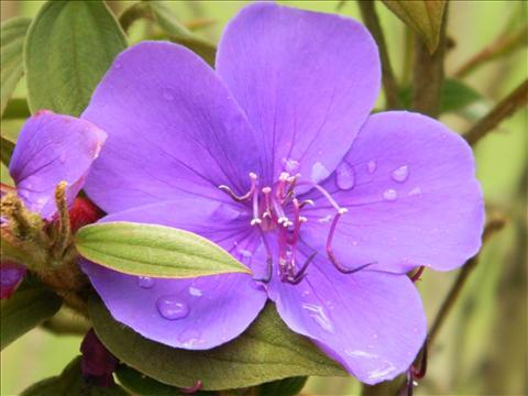 Beauty of water on flower