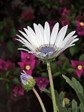 Season Flower