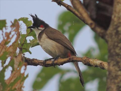 treepecker