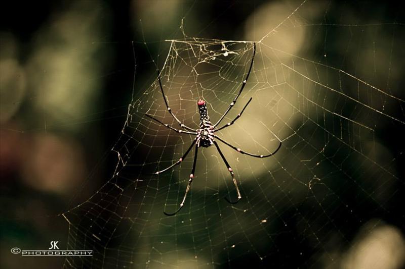 spider on net