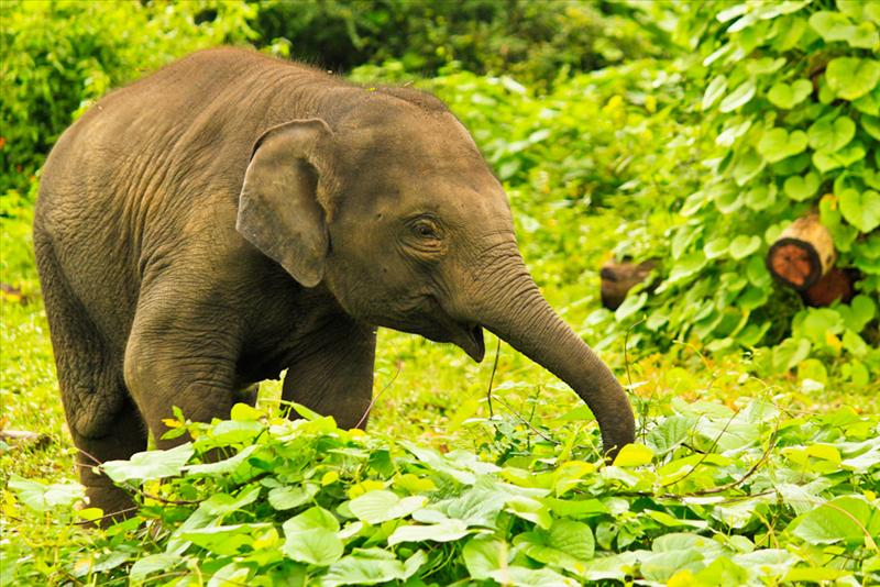 Playful baby elephant