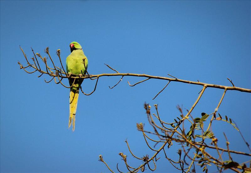 relaxing parrot