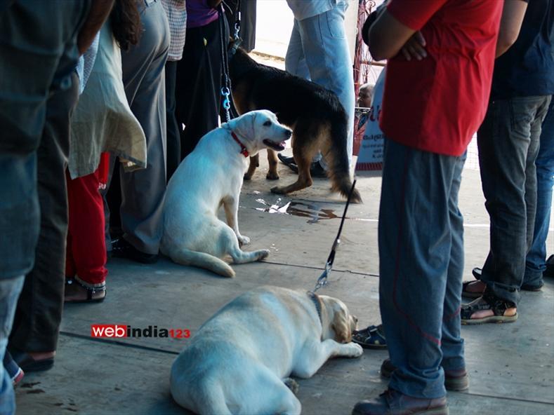 Dog show at Kochi