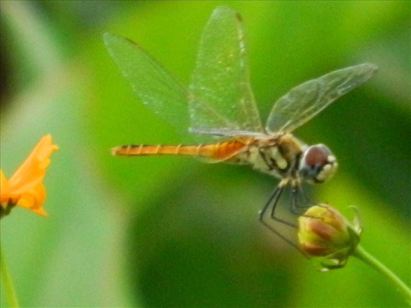 D fly on flower