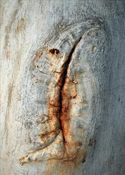 TEAR OF THE TREE