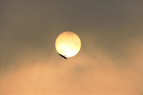 eagle against sun
