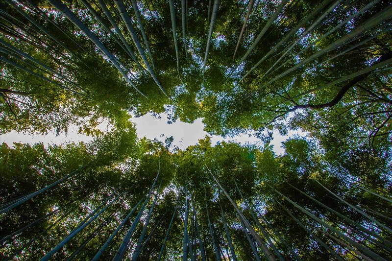 Bamboo MilkyWay