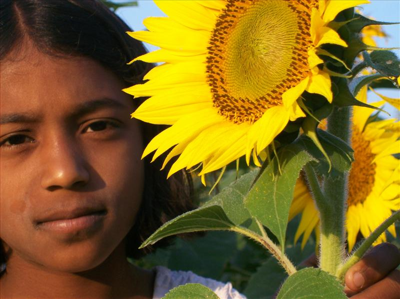 The Girl & the Sun Flower
