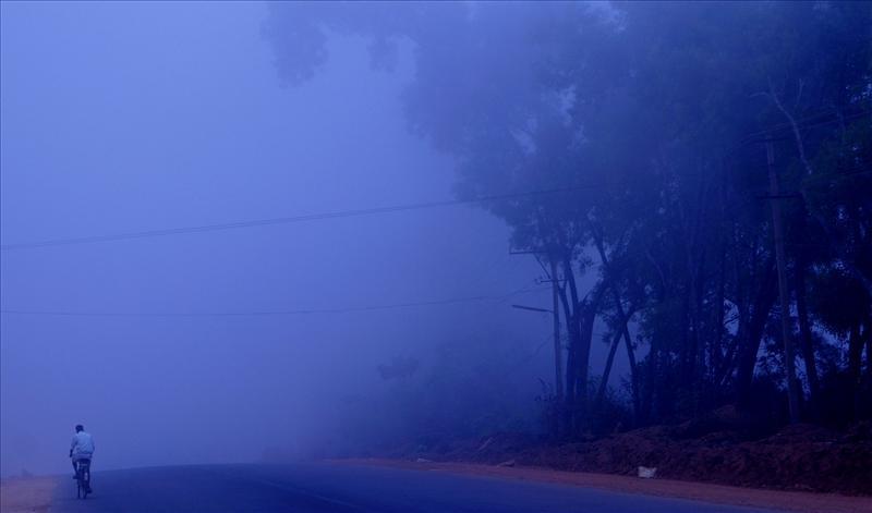 Morning fog Scene