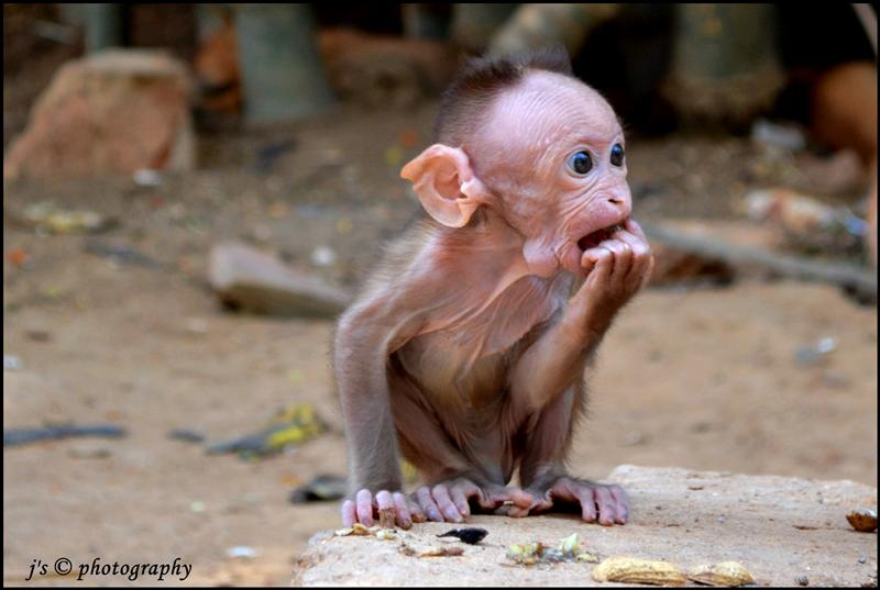 Don't think of yourself as an ugly person.,think of yourself as a beautiful monkey \m/ \m/