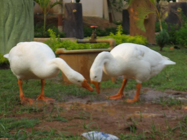 Love In Bird