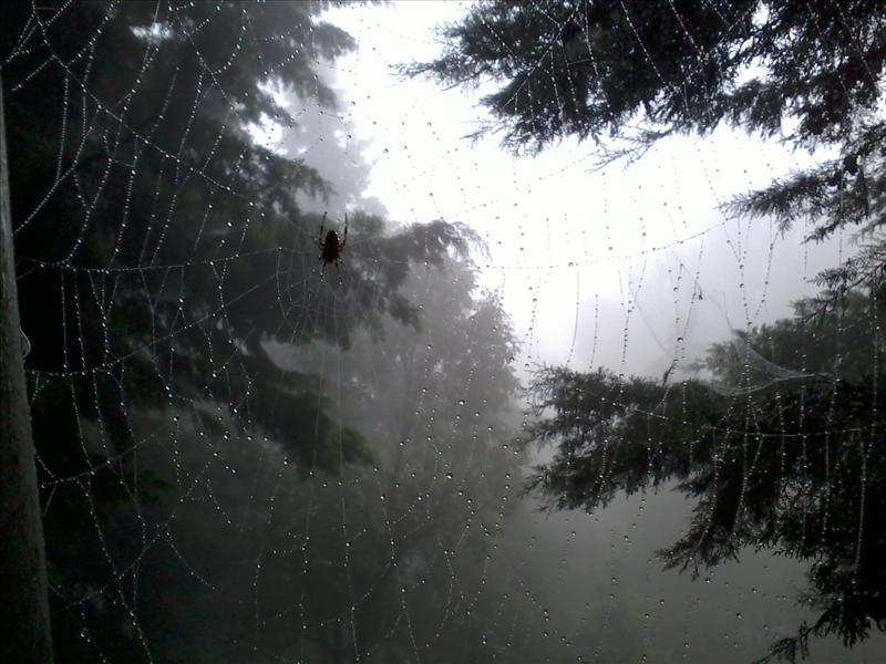dew & web