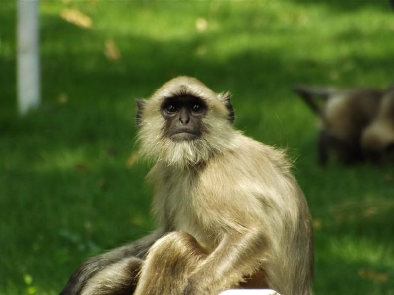 watching monkey