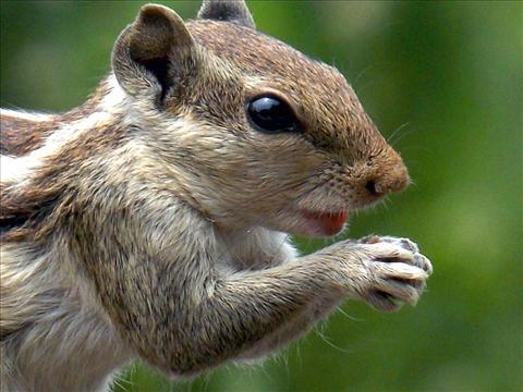 The Praying Squirrel
