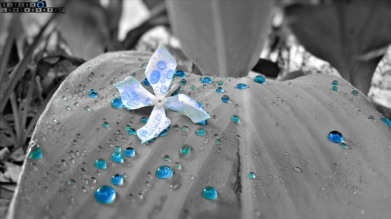 Blue Water Beads