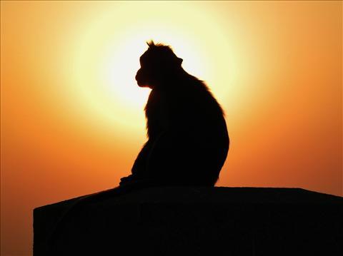 Enlightined Monkey