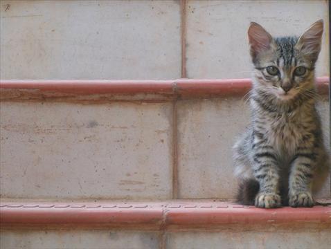 hello every1, im mr.cat