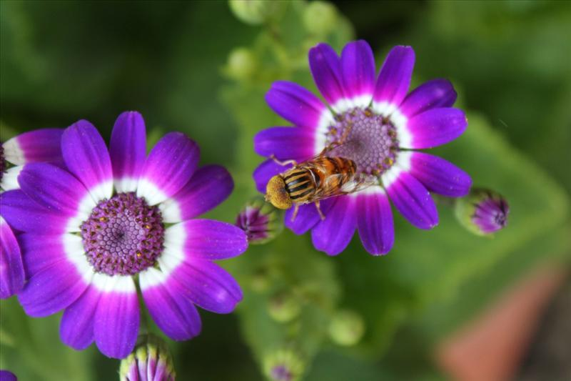 Secret Life Of A Bee