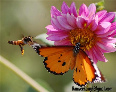 the butterfly take a juice from flower