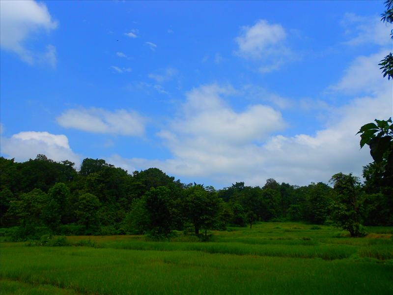 Green Scene Of India