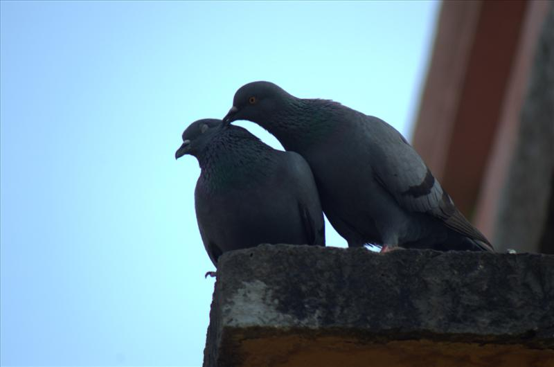 Love is Everywhere... <3