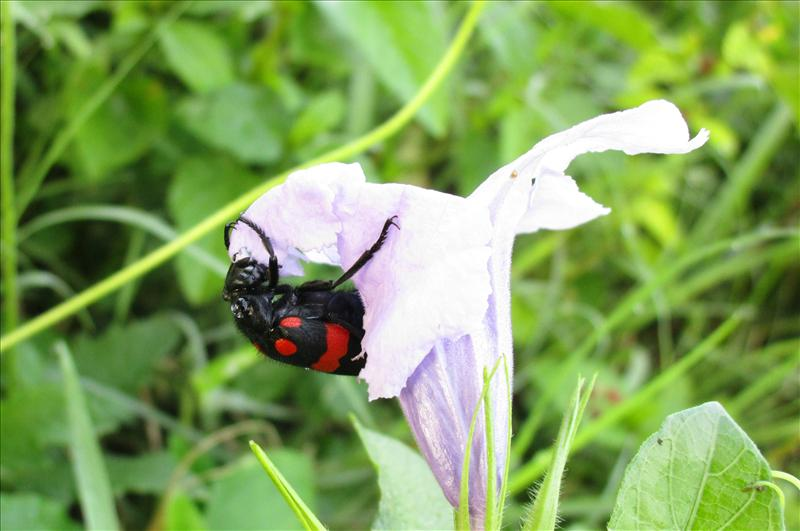 A BUG HUGGING A FLOWER