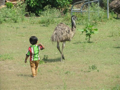 Emu with Litle Child