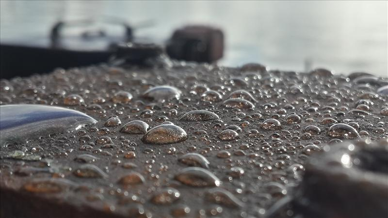 rain drops which look like pearls