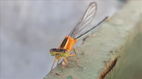 dragonfly sleeps
