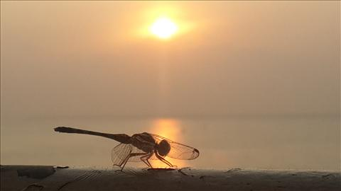 active dragonfly