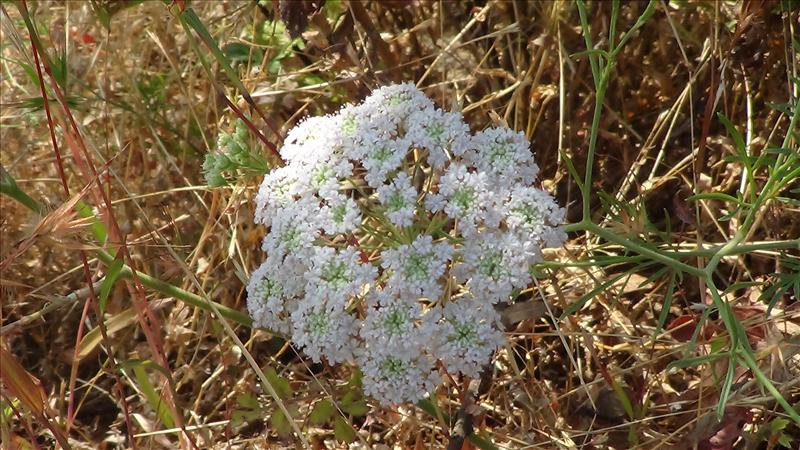 Amazing & Rare Flower