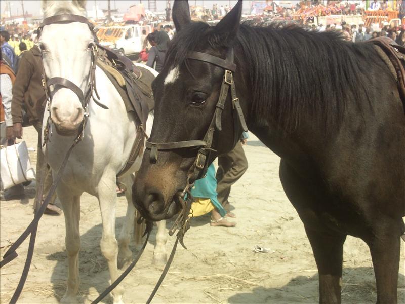 ARMED HORSES