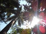 sunshine magic