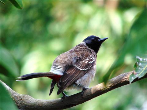 Still of a Bird