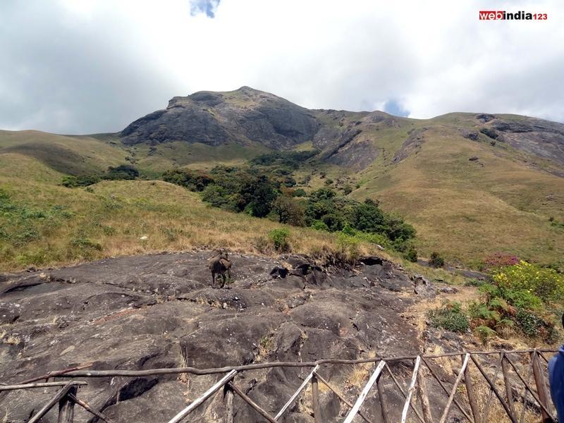 Eravikulam National Park - Munnar